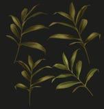 Green leaf set Royalty Free Stock Images