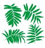Green leaf set Stock Images
