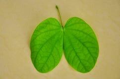 Green leaf shape Royalty Free Stock Photos