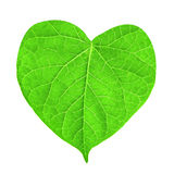 Green leaf in shape of heart Stock Photos