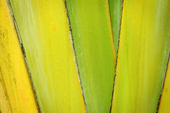 Green leaf sheath Royalty Free Stock Photo