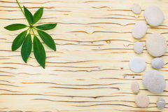 Green leaf of shefler and stones on wooden ice background Stock Photo