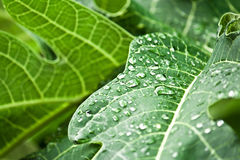 Green leaf with shiny drops Stock Image