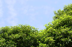Green leaf and sky. Stock Photography