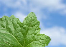 Green leaf and sky Royalty Free Stock Photography