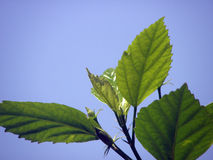 Green leaf with sky Background Stock Photos