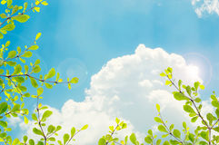 Green leaf on sky background. Green leaf isolated on sky background royalty free stock photos