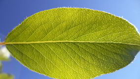 Green leaf. Sky blue summer tree sun royalty free stock photography