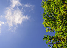 Green leaf and sky. The leaf and clear sky with top view Royalty Free Stock Photos