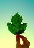 Green Leaf on the Sky Royalty Free Stock Photography