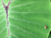 Green leaf with small moth. A green moth on a leaf Royalty Free Stock Image