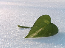 Green leaf on a snow. The green leaf freezes on a white snow Royalty Free Stock Photography