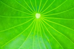 Green leaf soft texture beautiful background with copy space addgreen leaf soft texture beautiful background with copy space add t. Green leaf soft texture Stock Image
