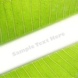 Green Leaf with space Royalty Free Stock Image