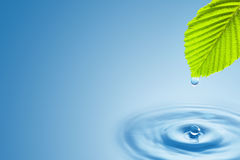 Green leaf with splashing water drops. Green leaf with splashing water drops on the blue background Stock Image