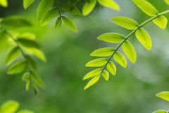 Green leaf. In the spring Stock Photography