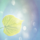 Green leaf in spring Royalty Free Stock Photo