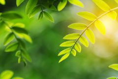 Green leaf in spring. Green leaf with sunshine in spring Stock Photos