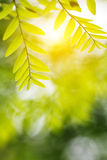 Green leaf in the spring. With sunshine Royalty Free Stock Image