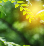 Green leaf in the spring. With sunshine Royalty Free Stock Photography