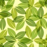 Green leaf spring wallpaper, elegant fresh foliage or greenery, vector illustration.  Royalty Free Stock Images