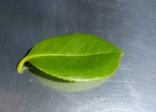 Green leaf on stainless steel Royalty Free Stock Image