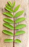 Green Leaf and Stalk on Wood. Green leafs of a fresh plant shown against a wooden background Stock Images