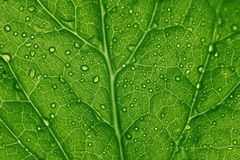 Green leaf structure Royalty Free Stock Photos