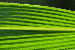 Green leaf structure Royalty Free Stock Images