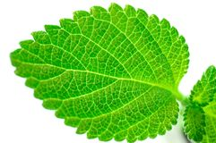 Green leaf structure. Isolate on white Royalty Free Stock Photos