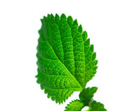 Green leaf structure Stock Photography