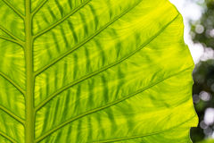 Green leaf in summer Stock Photo