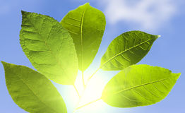 Green leaf in a sunny day Stock Images