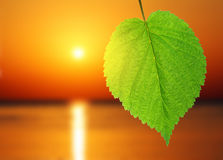 Green leaf and sunrise over sea Stock Photography