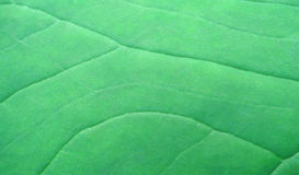 Green leaf surface Royalty Free Stock Images