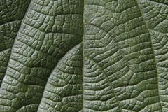 Green leaf surface. Stock Photos