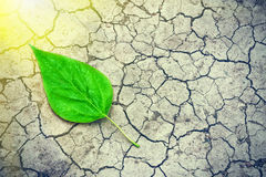 Green leaf on the surface of the dry cracked land in the rays of the sun. Environmental disaster. Severe drought and lack of moist stock images