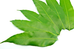 Green leaf  tabulate on a white background. Many green leaf on a white background Royalty Free Stock Photography
