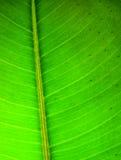 Green leaf texture Stock Photos