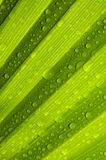Green leaf texture. Green palm leaf with water droplets Stock Photo