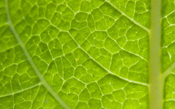 Green Leaf Texture. Macro texture shot of a green leaf Royalty Free Stock Photography