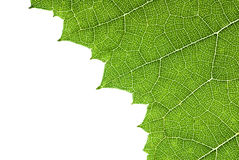 Free Green Leaf Texture Stock Images - 47005314