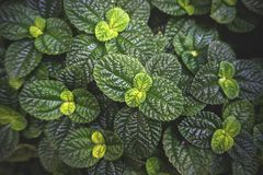 Green leaf texture. Leaf on texture background. stock image