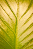 Green leaf texture background Stock Photos