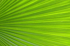 Green leaf texture for background Stock Photography