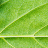 Green leaf texture close up background Stock Image