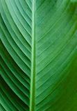 Green leaf texture detail Stock Photo