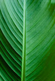Green leaf texture detail Stock Photography
