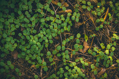 Green leaf texture, forest plants background Stock Photos