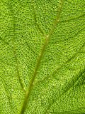 Green leaf texture, macro. Royalty Free Stock Images